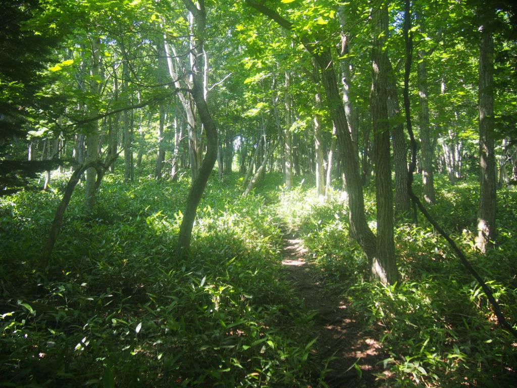 知床の原生林