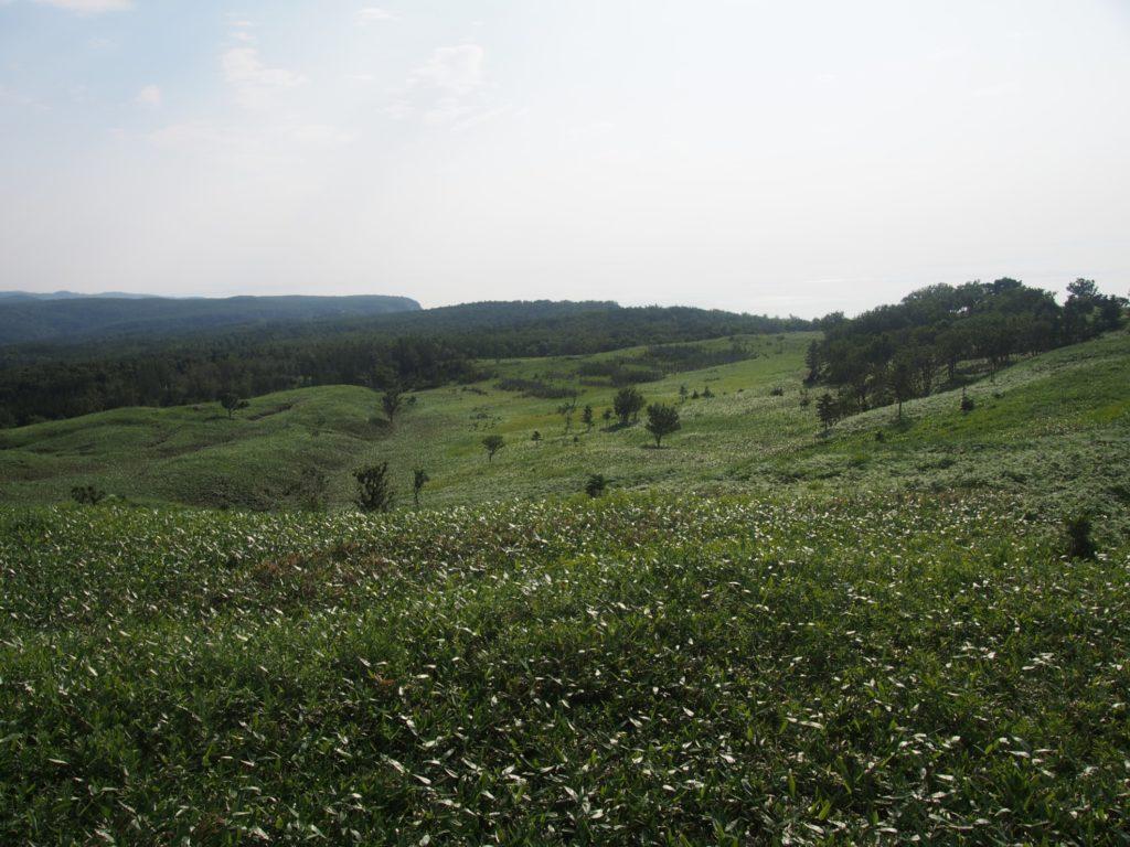 知床五湖の草原