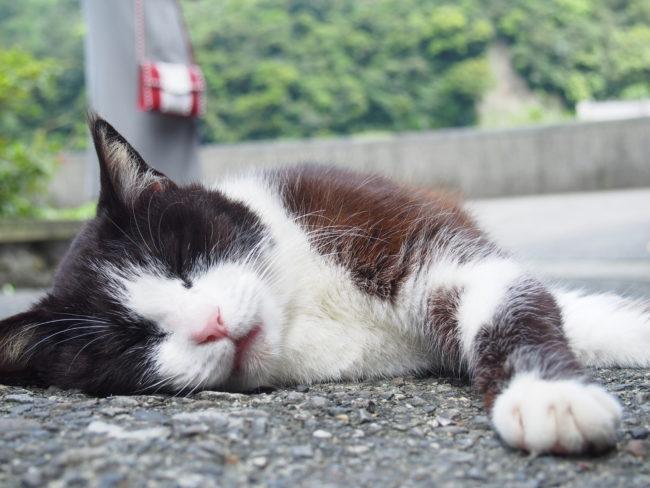 眠る猫前から